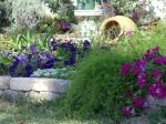 Aspargus Fern and Petunia