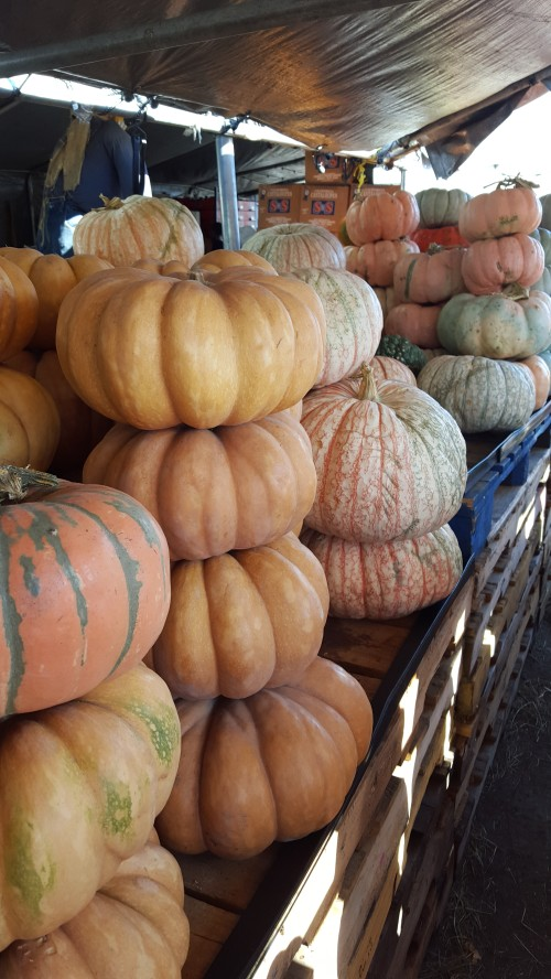 Cinderella Pumpkins